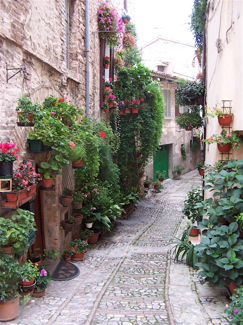 Flowered Walkway
