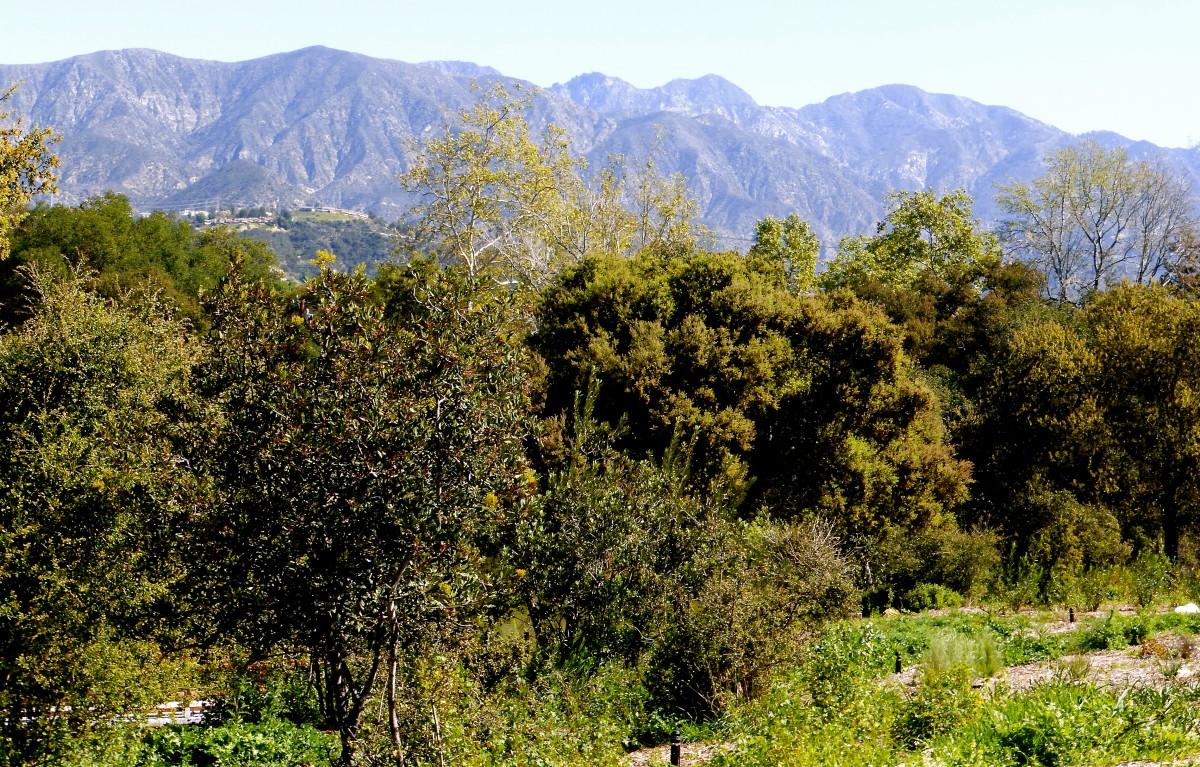 Descanso Gardens - La Cañada Flintridge - Travels With Mai Tai Tom