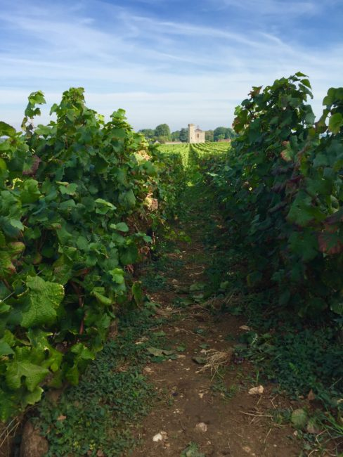 routes-des-grand-crus-burgundy-france-2-1